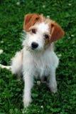 портрет s собаки Стоковая Фотография RF