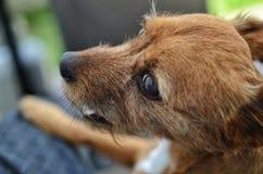 портрет s собаки Стоковые Фото