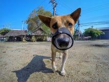 портрет s собаки Стоковые Изображения