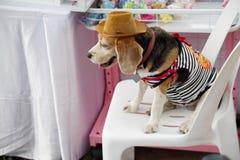 портрет s собаки Стоковое фото RF