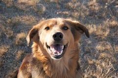Портрет ` s собаки Стоковые Фотографии RF