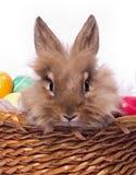 портрет s bunnie стоковые изображения rf