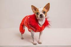 Портрет shot-3 собаки Стоковые Изображения RF
