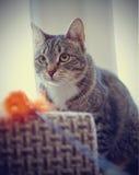 Портрет striped кота с игрушкой Стоковые Фотографии RF