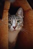 Портрет striped кота Стоковое Изображение RF