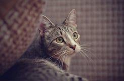Портрет striped кота Стоковое фото RF