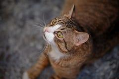 Портрет striped кота Стоковые Изображения RF