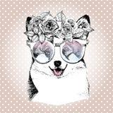 Портрет Vecotr собаки, носящ флористические венок и солнечные очки Порода Пембрука corgi Wesh Стоковое Фото