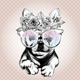 Портрет Vecotr собаки, носящ флористические венок и солнечные очки Порода французского бульдога Стоковое Изображение RF