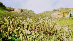 Португальские кактусы и флора стоковое фото