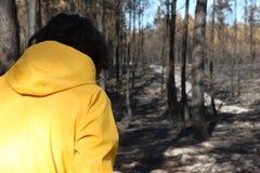 Португальский сгорели лес, который Стоковые Изображения