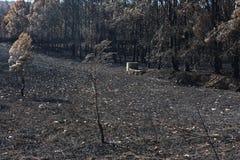 Португальский сгорели лес, который Стоковое Фото