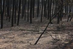 Португальское горение леса Стоковые Изображения RF