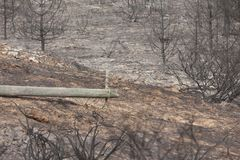 Португальское горение леса Стоковые Фото