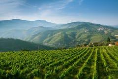 Португалия Взгляд сверху виноградников на холмы стоковое изображение rf