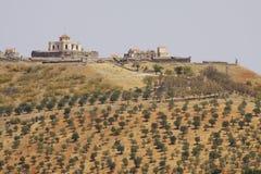 Португалия: Оливковые дерева Стоковое Изображение