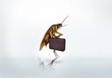 Портфель дела таракана, whitebackground стоковая фотография rf