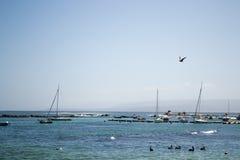 Порт в Algarrobo Чили Стоковая Фотография RF