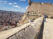 Порт и город в Испании, чайке готовой для летать стоковые фото