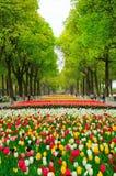 Порт цветка Шанхая Стоковая Фотография