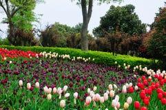 Порт цветка Шанхая Стоковое Изображение RF