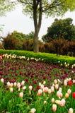 Порт цветка Шанхая Стоковые Изображения RF