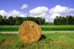 Порука сена в поле Стоковое Изображение RF