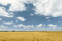 Поруки сена на поле Стоковое Фото