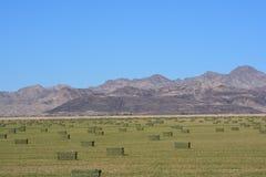 Поруки сена около Колорадо стоковое изображение rf