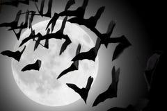 Порхать летучих мышей Стоковые Изображения