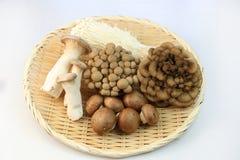 Порция гриба различных видов блюд Стоковые Фото