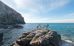 Посадка пеликана на утесе на этап Lobos - Punta Lobos около пляжа Cerritos в Нижней Калифорнии Мексике Стоковое Фото