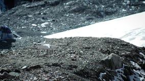 Посадка quadrocopter в снежных горах Пилот кладет трутня на путешествие акции видеоматериалы