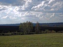 Посадка березы на краю поля весной Стоковая Фотография
