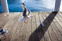 Посадка чайки Стоковые Изображения
