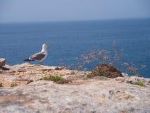 Посадочные места чайки на береге океана Стоковые Фото