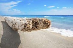 Посадочные места Driftwood на пляже с белым песком Стоковые Изображения RF