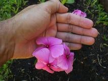 Посвящение садовника Стоковые Изображения