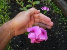 Посвящение садовника Стоковая Фотография RF
