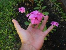 Посвящение садовника Стоковые Изображения RF