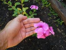 Посвящение садовника Стоковая Фотография