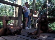 Посетители в Reha-станции Sepilok Orang Utan в Борнео Стоковые Фото