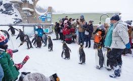 Посетители зоопарка наблюдая пингвина проходят парадом на зоопарке Хоккаидо Стоковая Фотография