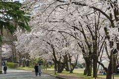 Посетители в парке замка Kajo (парк места замка Yamagata) Стоковые Изображения
