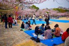 Посетители наслаждаются их пикником под деревьями Сакуры стоковое изображение rf