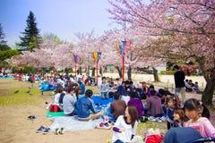 Посетители наслаждаются их пикником под деревьями Сакуры стоковые изображения rf