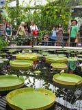 Посетители на доме Lilys, сады Kew Стоковые Фотографии RF