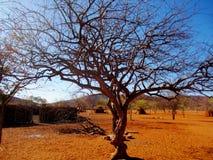 Посещая земля Himba в северной Намибии стоковая фотография rf