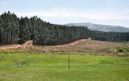 Посещение лесов стоковые изображения rf