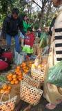 Посещение моря апельсинов стоковые изображения rf